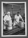 Cheese-making at Bladnoch creamery
