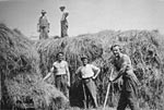 Building a hay stack, Felyennan, Mochrum, 1930s