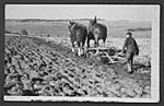 Young boy ploughing, near Wigtown