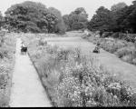 Dirleton Castle gardens - Herbaceous border laid out in 1931