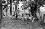A Meet of the Jedforest Foxhounds at Westerhouses Farm near Bonchester Bridge, Roxburghshire, Scottish Borders