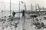 Fishing with a stake salmon net in the Cree Estuary, in 1955