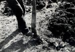 Foot plough in South Boisdale, South Uist, in 1947