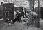 Workers hand batching jute at Caird (Dundee) Ltd., Jute Manufacturers
