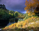 Native Woodlands of Glen Strathfarrar in Autumnal Splendour