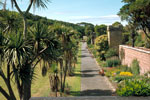 Culzean Castle, Cordyline Palm Walk