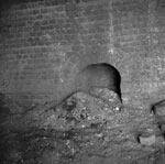 Flue opening and ash pile, Avonbridge Brick Works, Falkirk