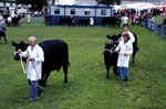 Aberdeen Angus at the 2002 Royal Highlands Show
