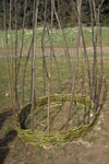 C11: Coracle construction, the rim and sides complete