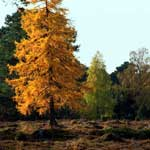 Autumn colours in Highland Perthshire