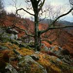 Autumn colours, Loch Lomond and The Trossachs National Park