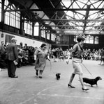 A view of a dog show held in the Waverley Market in Edinburgh