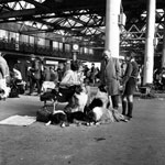 A view of a dog show in Waverley Market in Edinburgh