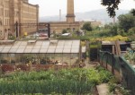 Allotments in Saltaire