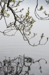 Reflection of branches in the water of Loch Ness
