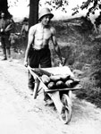 Young soldier transporting shells, Messines, Belgium, 1917