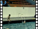 1985 Swimmers Training in Pool (silent video clip)