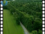 Aerial View of Beech Hedge (silent video clip)