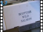Boxing & Grading Salmon at Armadale (video clip)