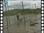 Rigging the fish court of a Solway Stake Net (video clip)