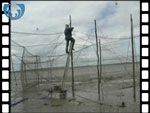 Completing the set up of a Solway Stake Net (video clip)